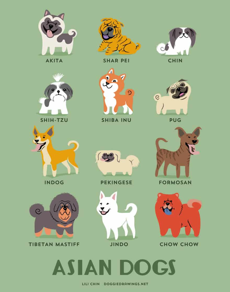 15 Illustration Posters Showing 200+ Dogs of the World