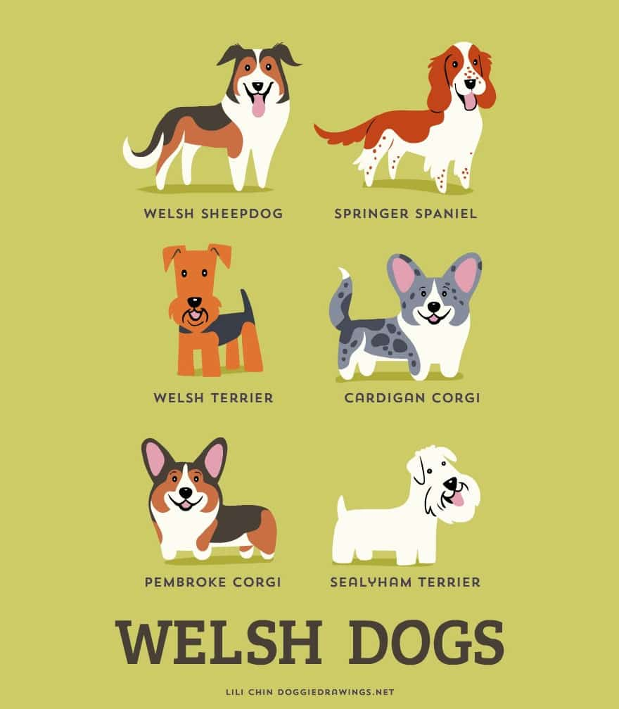 The-Geographic-Origin-Of-Dog-Breeds-006