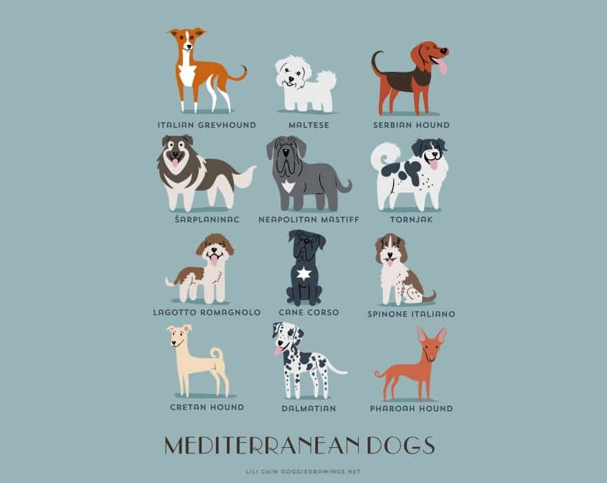 The-Geographic-Origin-Of-Dog-Breeds-007