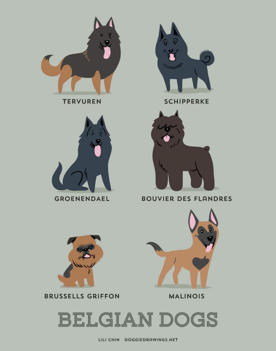 The-Geographic-Origin-Of-Dog-Breeds-008