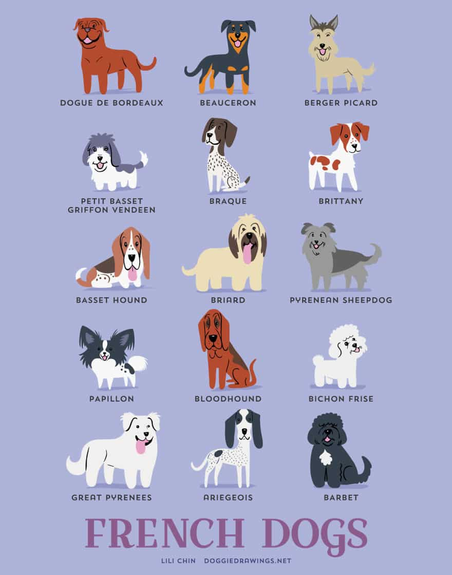 The-Geographic-Origin-Of-Dog-Breeds-009