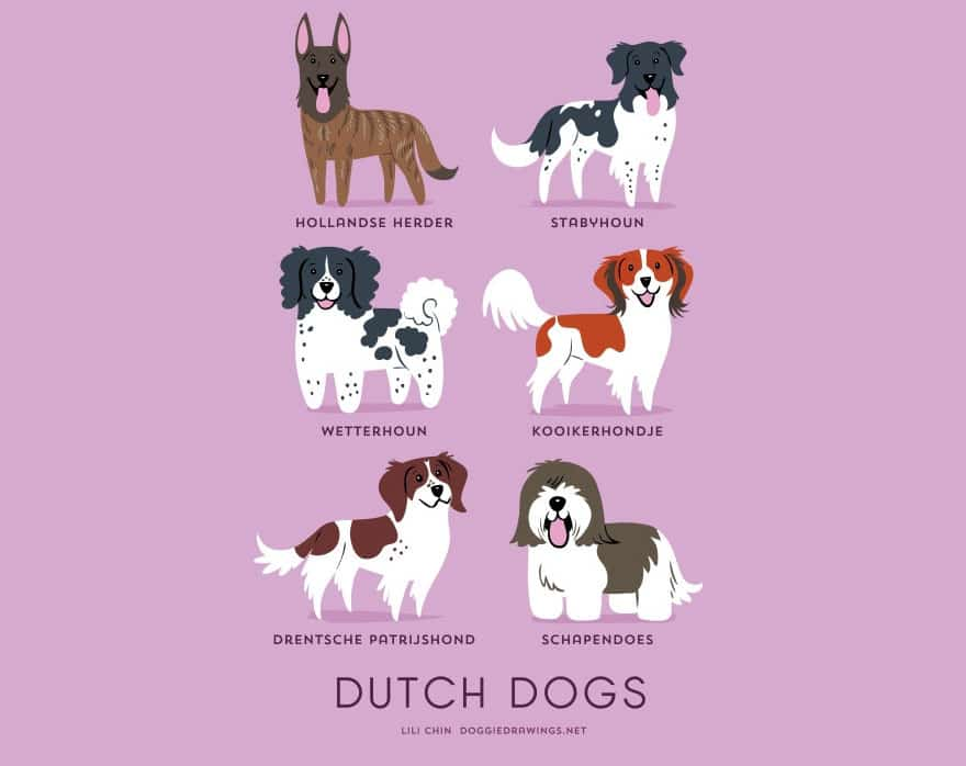 The-Geographic-Origin-Of-Dog-Breeds-012