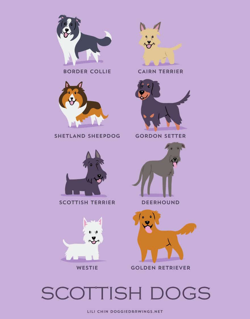 The-Geographic-Origin-Of-Dog-Breeds-014
