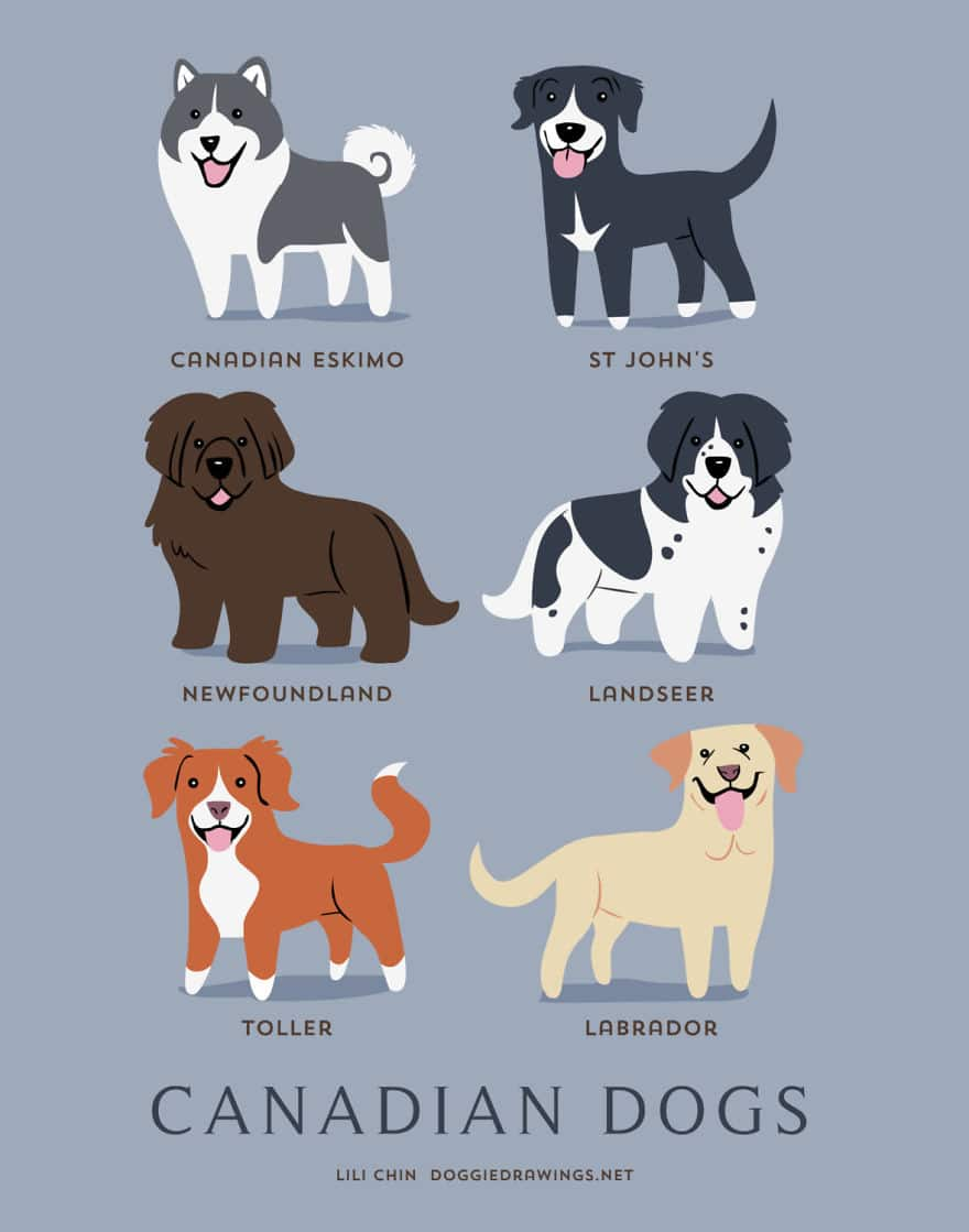 The-Geographic-Origin-Of-Dog-Breeds-015