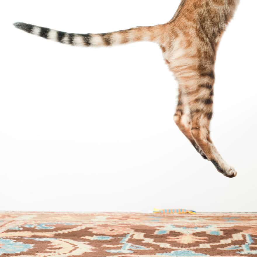 funny-jumping-cats-1011__880
