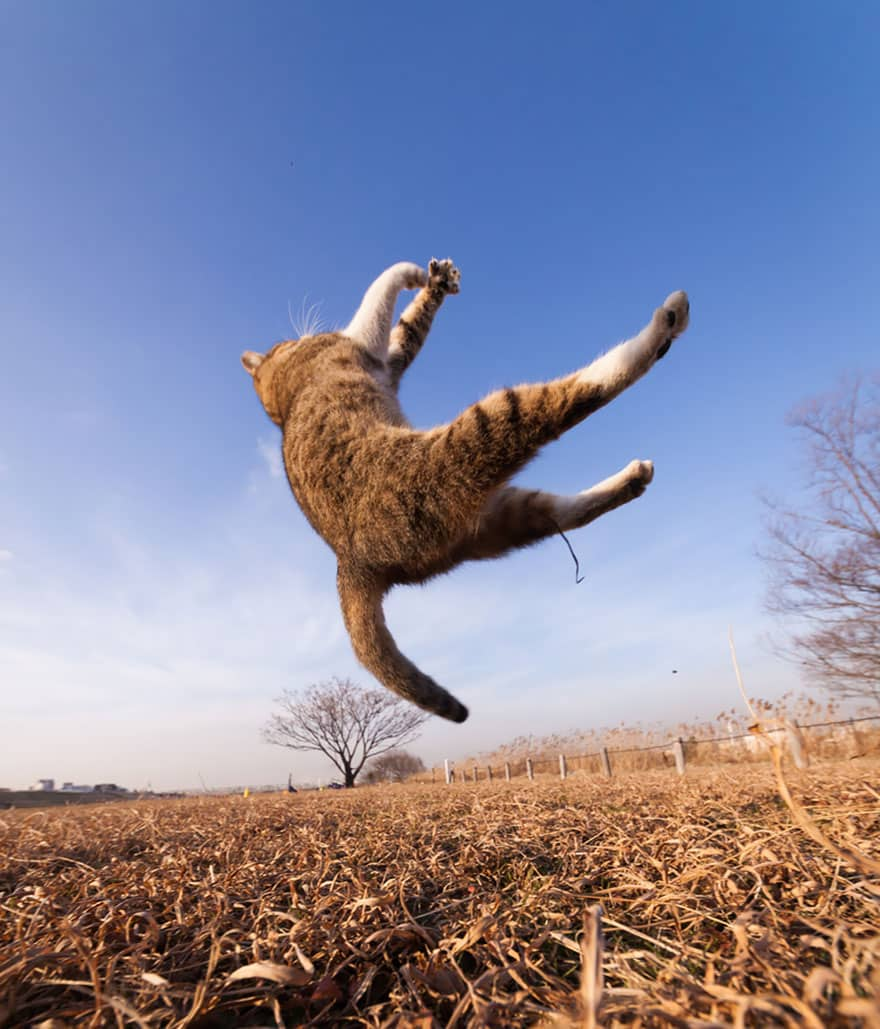 Home Design Software: 52 Jumping Cats At Play Look Like Ninjas -DesignBump