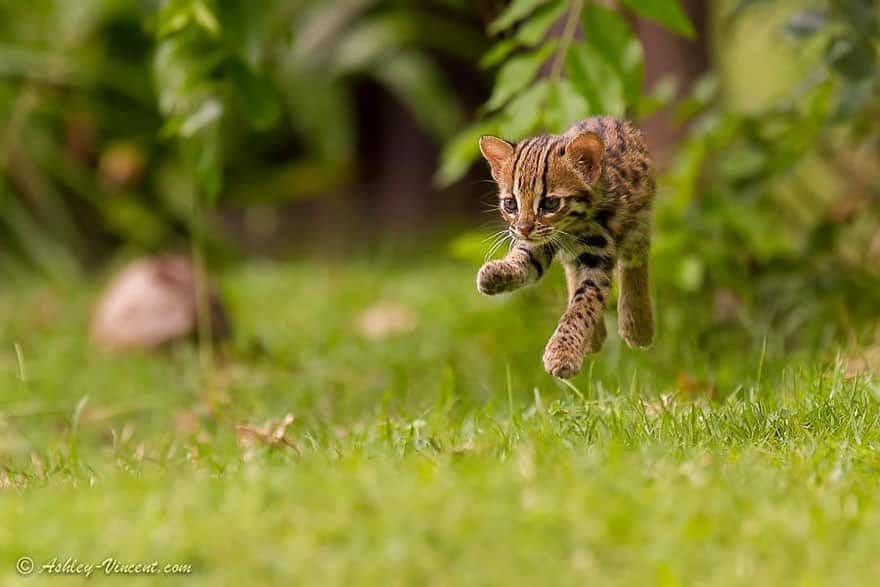 funny-jumping-cats-131__880