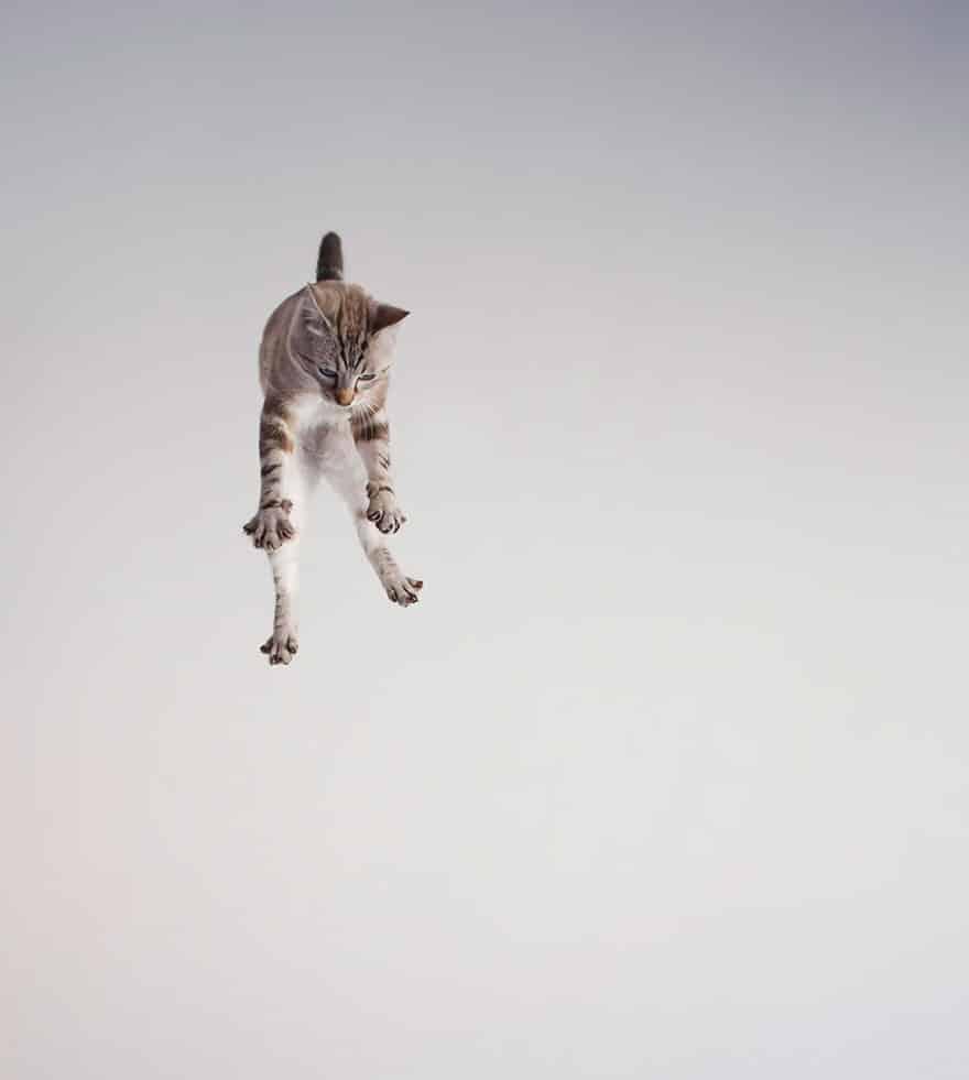 52 Jumping Cats At Play Look Like Ninjas