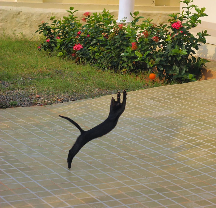 funny-jumping-cats-15__880