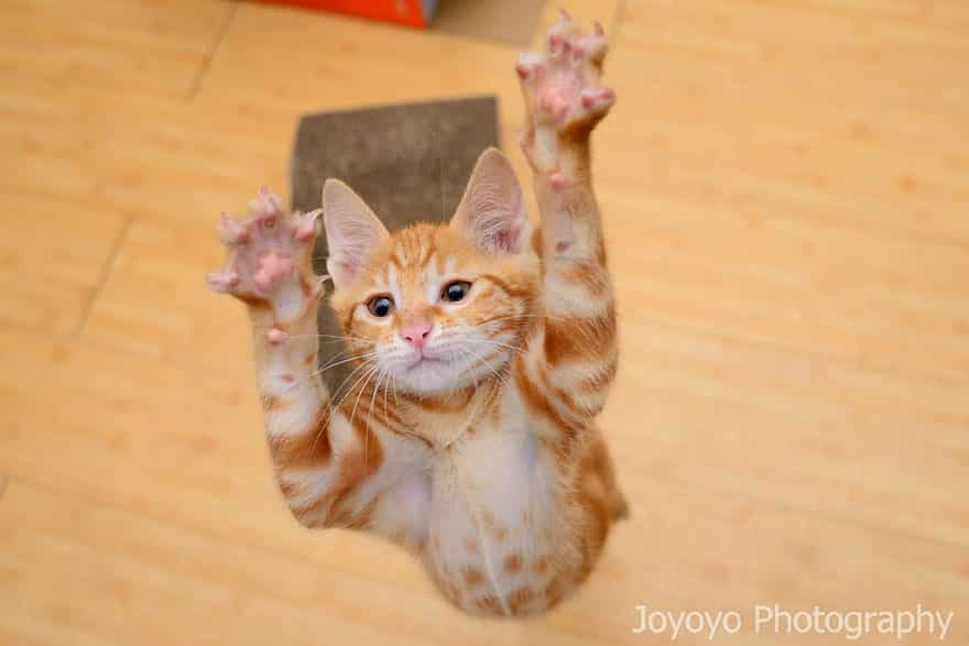 funny-jumping-cats-161__880