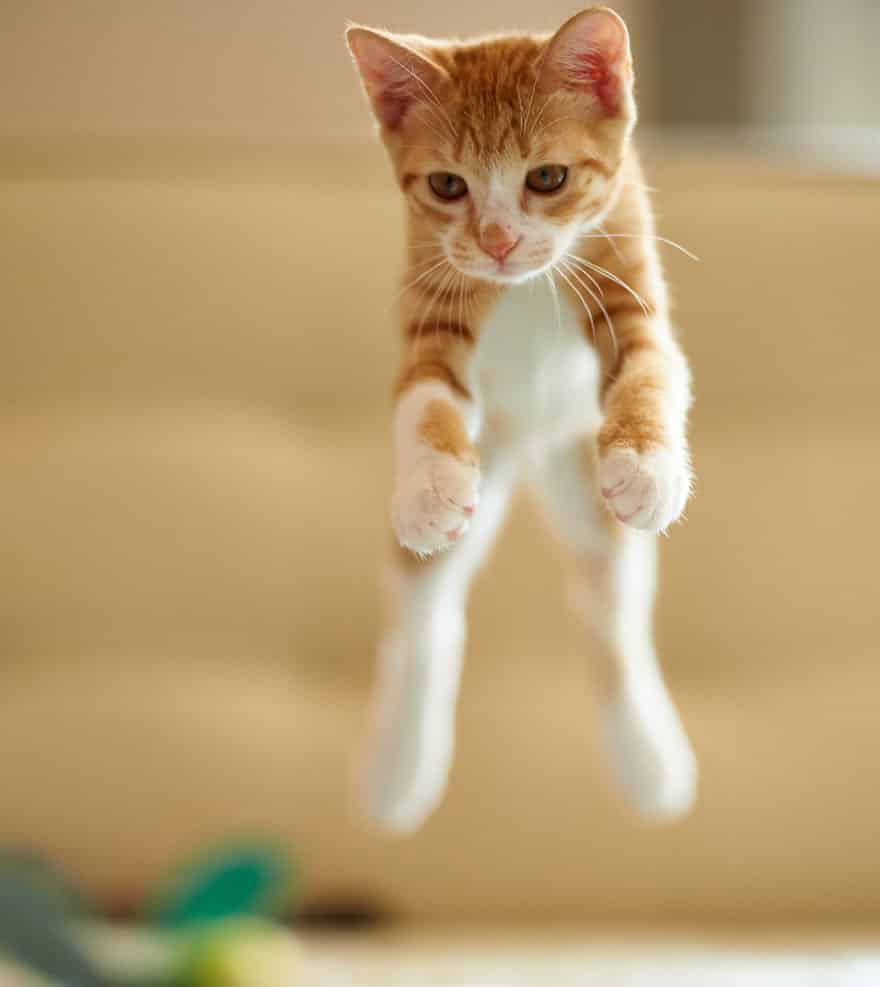 funny-jumping-cats-17__880