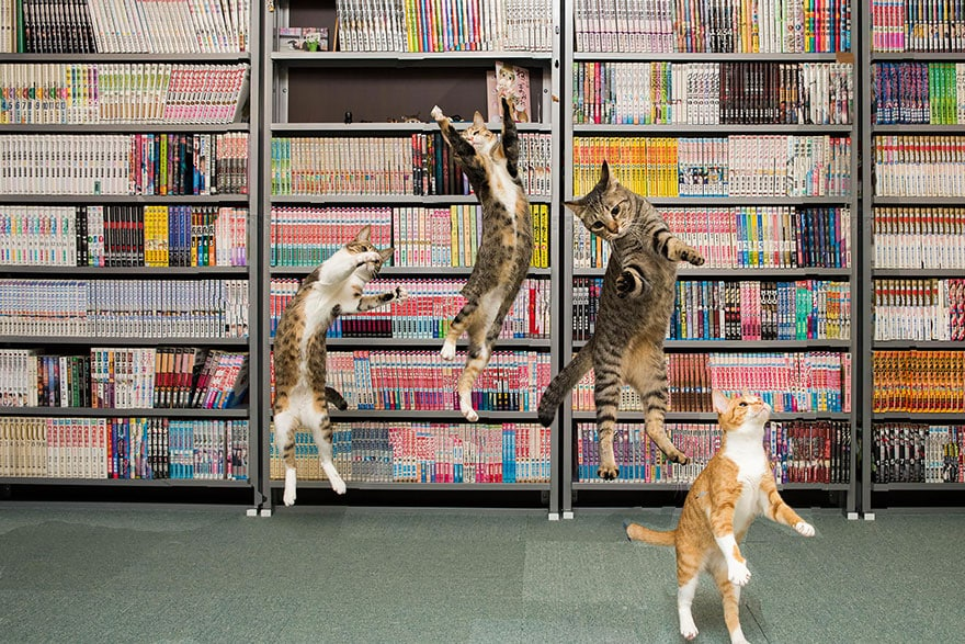 funny-jumping-cats-19__880