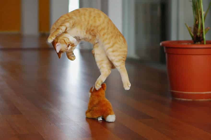 funny-jumping-cats-20__880