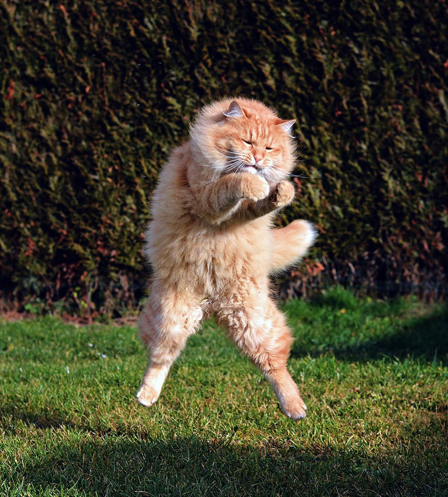 funny-jumping-cats-211__880