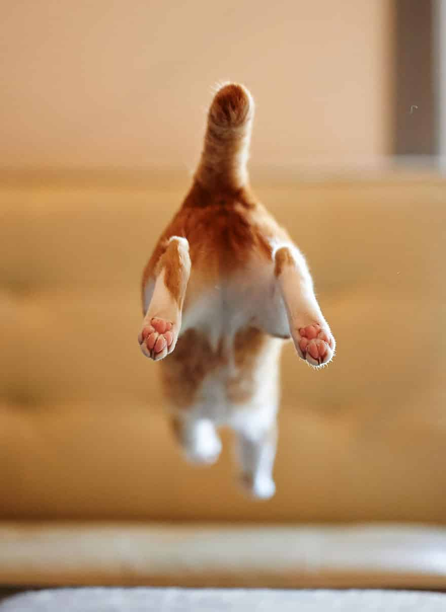 funny-jumping-cats-221__880