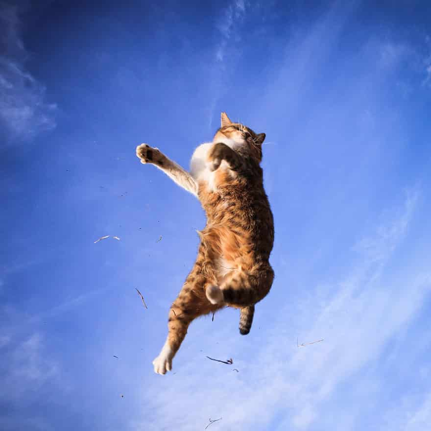 funny-jumping-cats-23__880