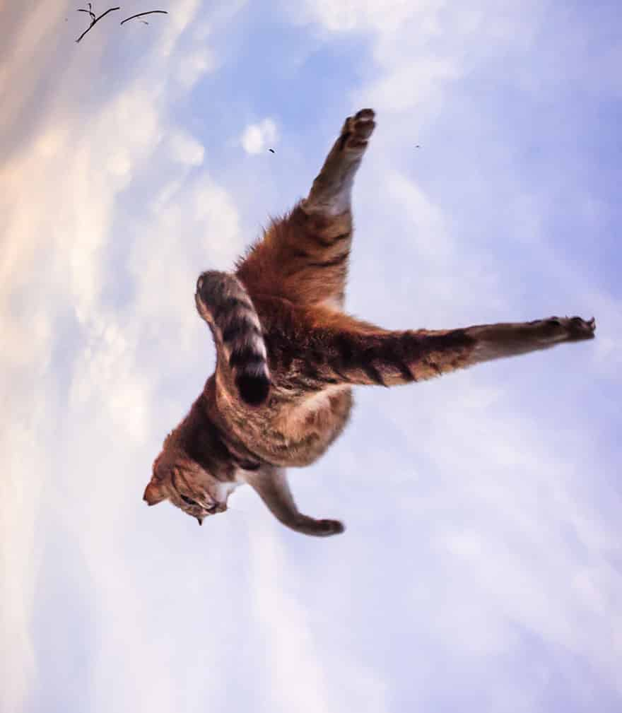 funny-jumping-cats-24__880