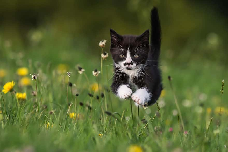 funny-jumping-cats-61__880