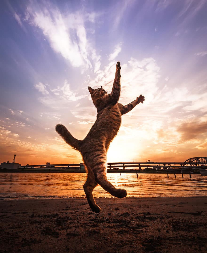 funny-jumping-cats-91__880