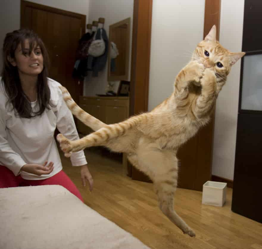 funny-jumping-cats-92__880