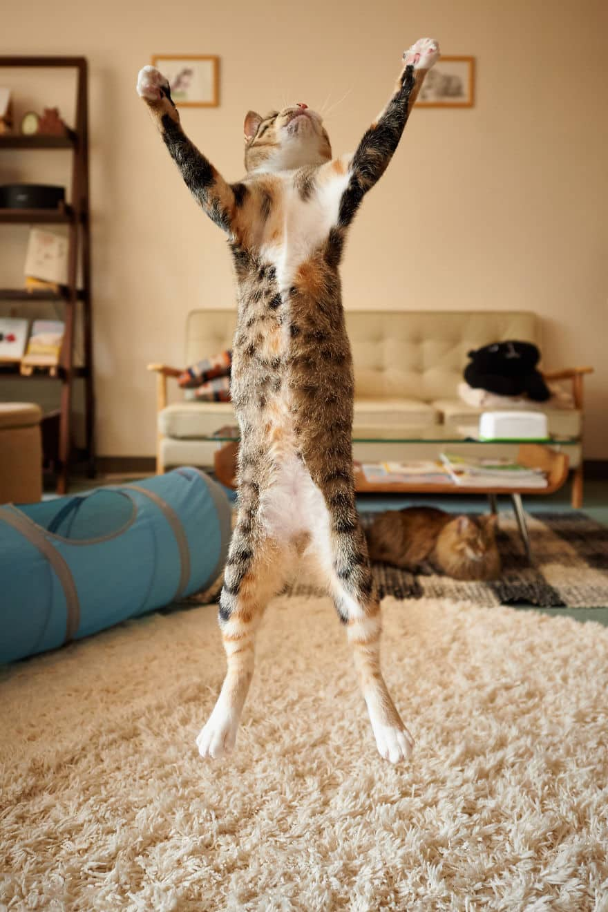 52 Jumping Cats At Play Look Like Ninjas -DesignBump