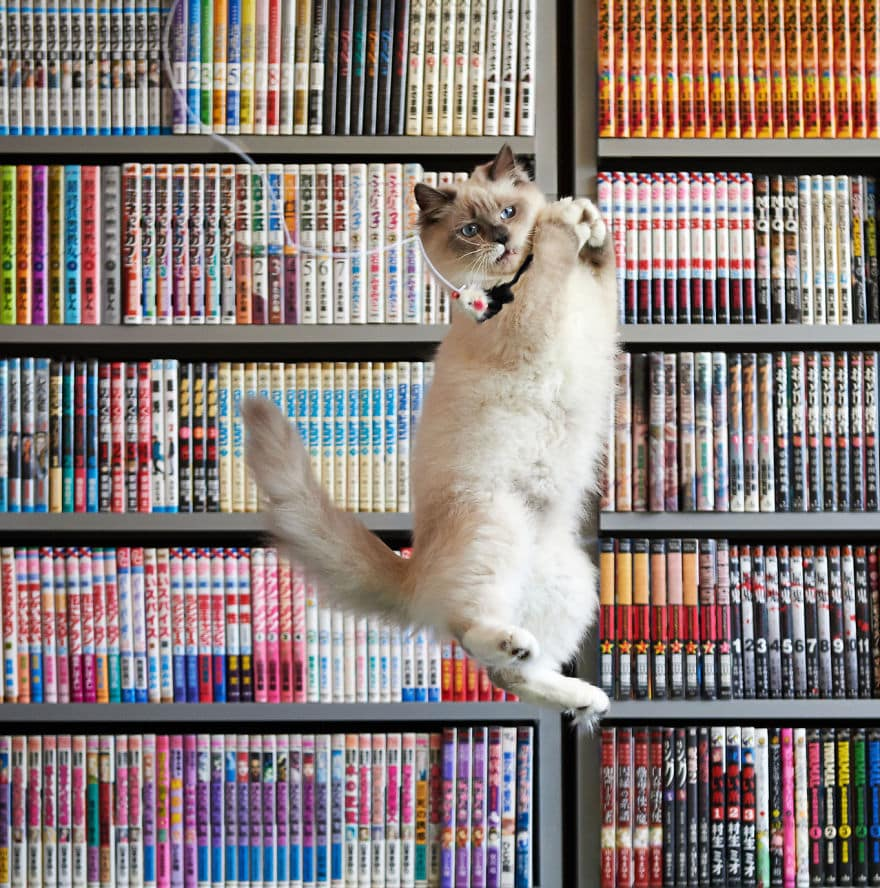 funny-jumping-cats-97__880