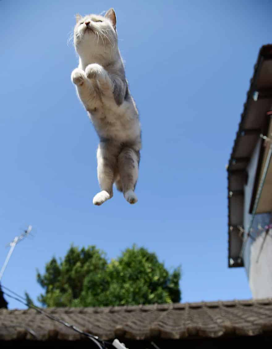 funny-jumping-cats-98__880