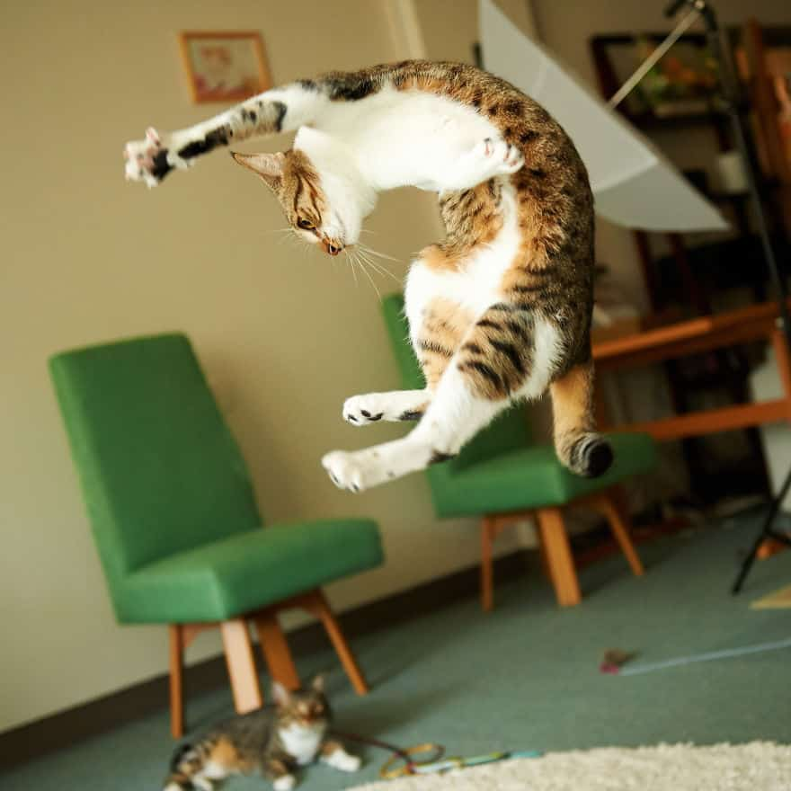 funny-jumping-cats-99__880