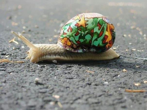 painted-snail-shell-art-9