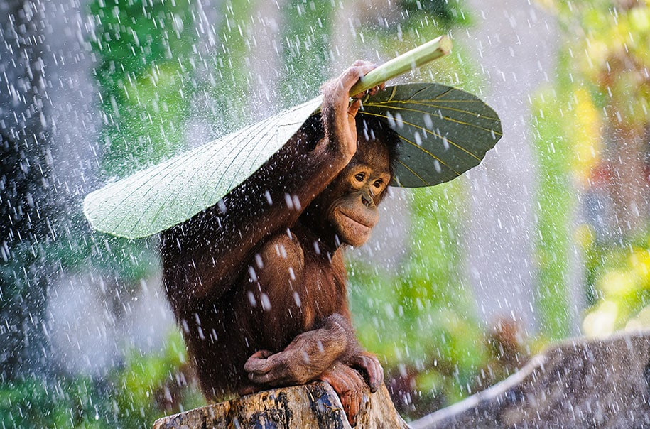 2015-sony-world-photography-awards-open-category-entries-1