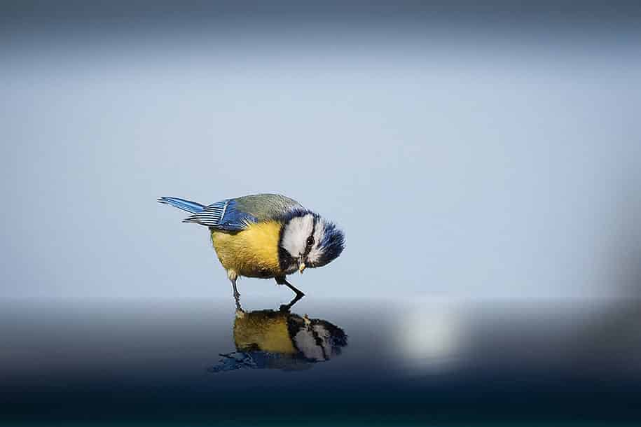 2015-sony-world-photography-awards-open-category-entries-15