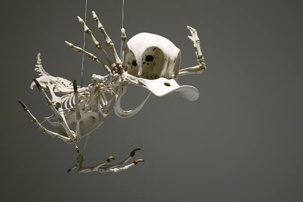 Donald Duck - 9 Looney Tunes Characters ReImagined As Skeletons