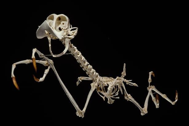 Roadrunner 9 Looney Tunes Characters ReImagined As Skeletons