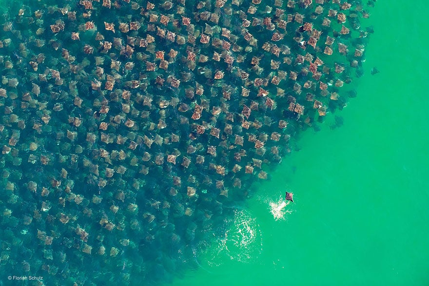 33 Most Beautiful Photos Of Animal Migration Designbump
