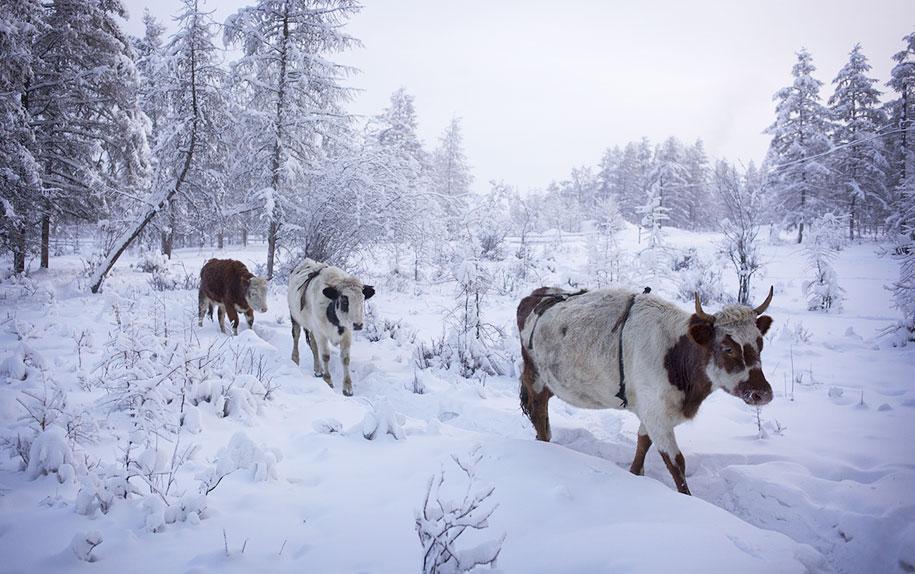 coldest-village-oymyakon-russia-amos-chapple-12