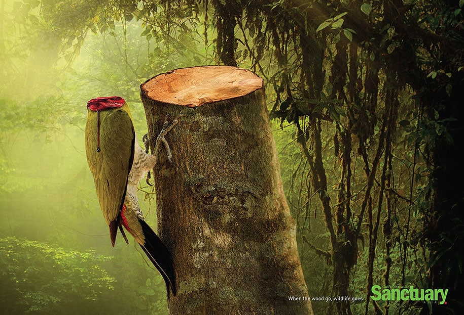 social-ads-call-of-the-wild-sanctuary-asia-1