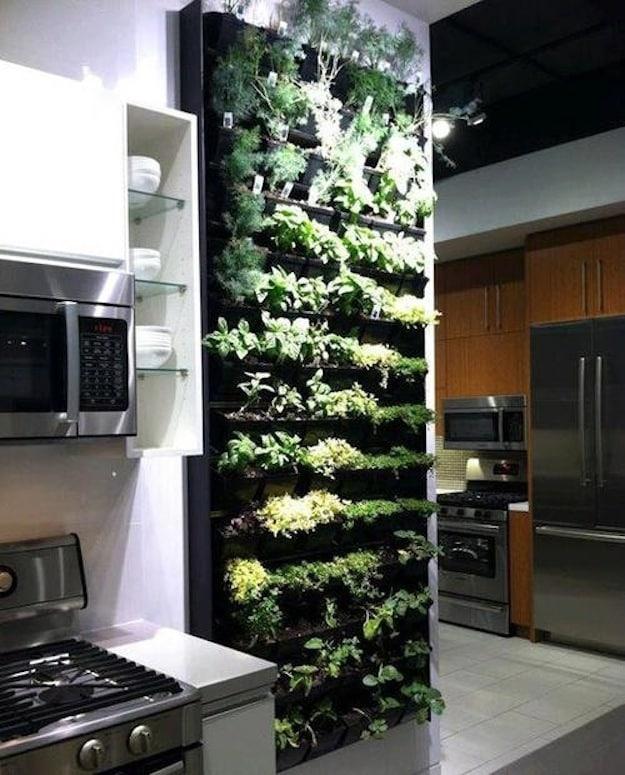 Evergreen Indoor Herb Garden