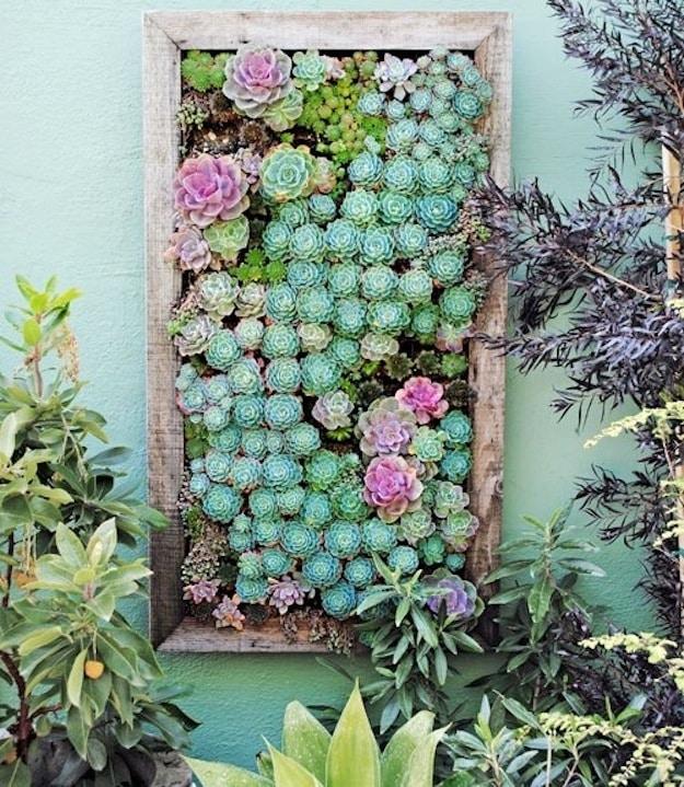 Succulent Collages