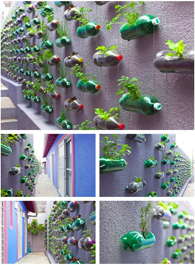 Recycled Bottle Herb Garden