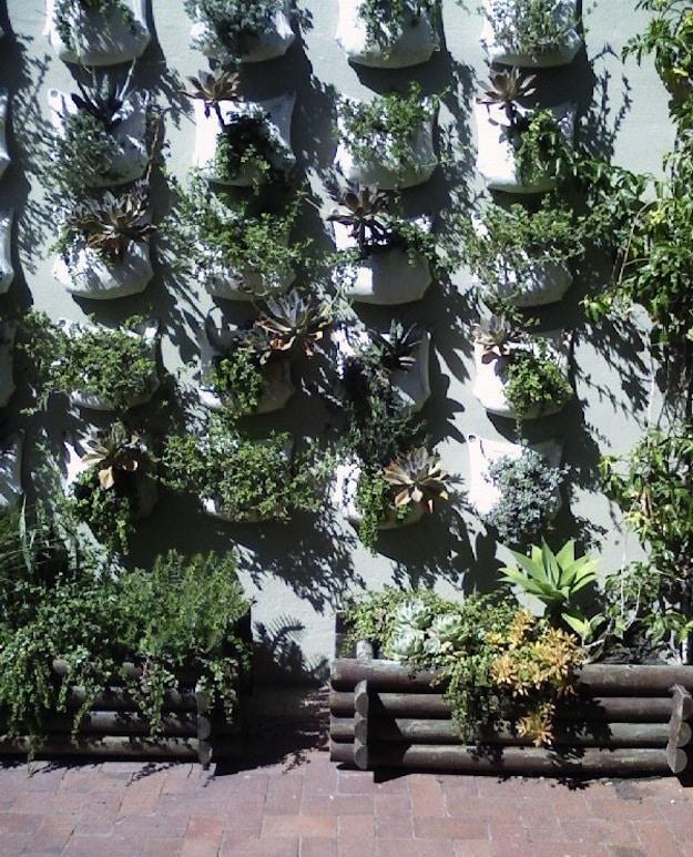 Hanging Desert Garden