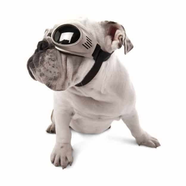 Does your dog love sticking her head out the window? Protect her eyes with a pair of Doggles.