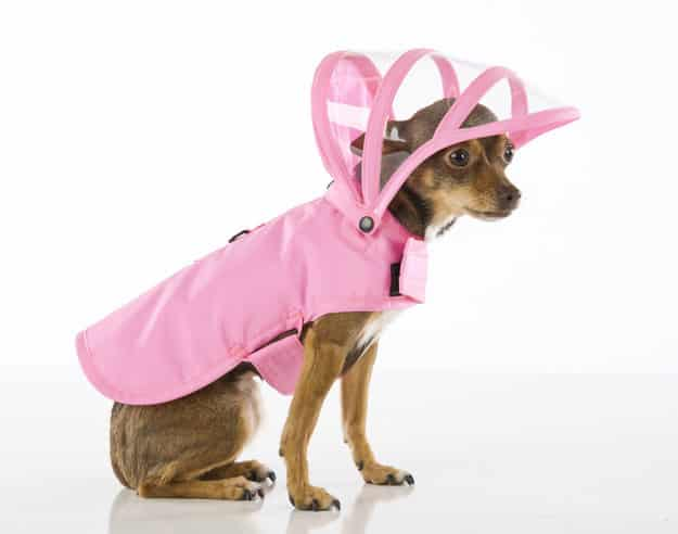 People may scoff at clothing for pets, but some pooches honestly prefer to stay dry: they should be allowed to wear a rain coat without shame.