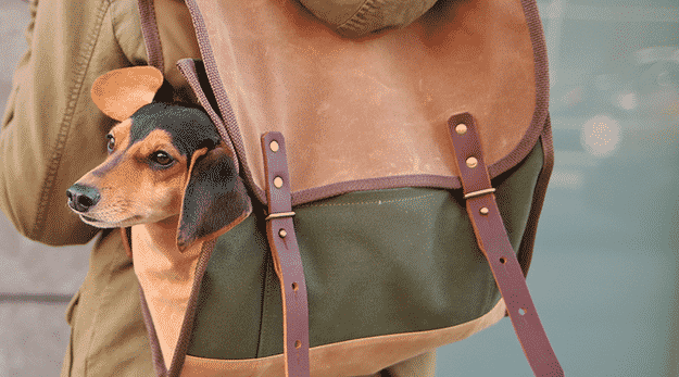 Your dog's legs may be too short to walk around all day, but they still want to come: backpack him.