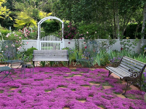 Replace your grass with creeping thyme.