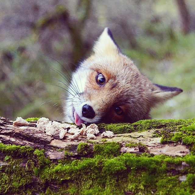 finnish-wildlife-feeding-squirrel-whisperer-konsta-punkka-15