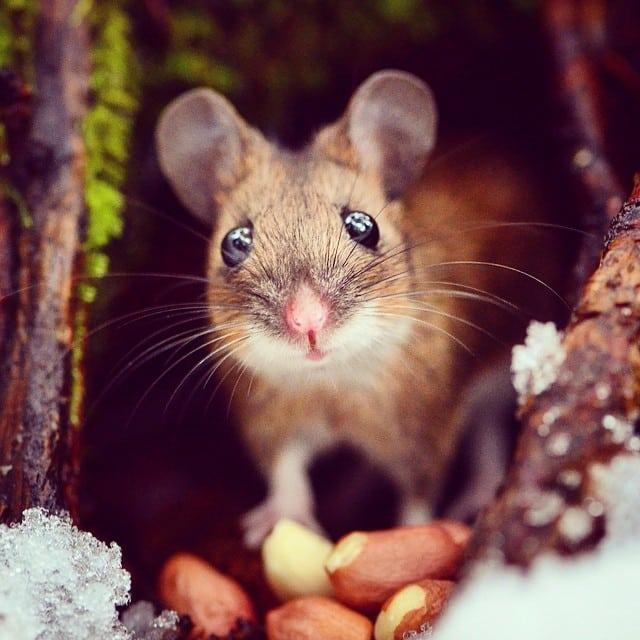 finnish-wildlife-feeding-squirrel-whisperer-konsta-punkka-16