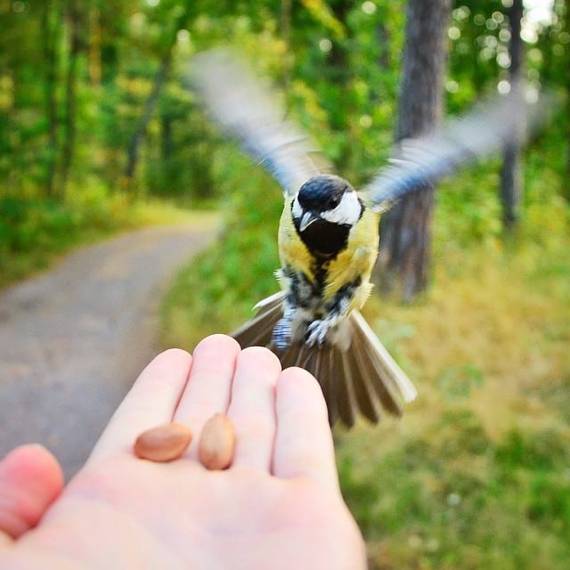 finnish-wildlife-feeding-squirrel-whisperer-konsta-punkka-19