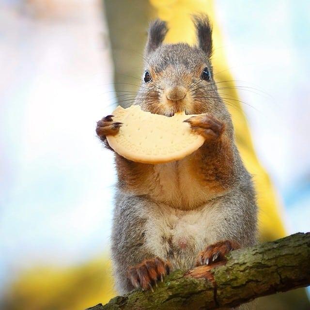 finnish-wildlife-feeding-squirrel-whisperer-konsta-punkka-44