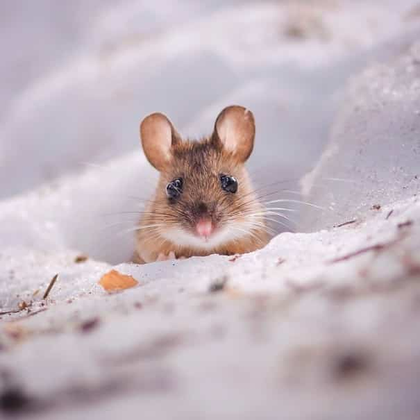 finnish-wildlife-feeding-squirrel-whisperer-konsta-punkka-49