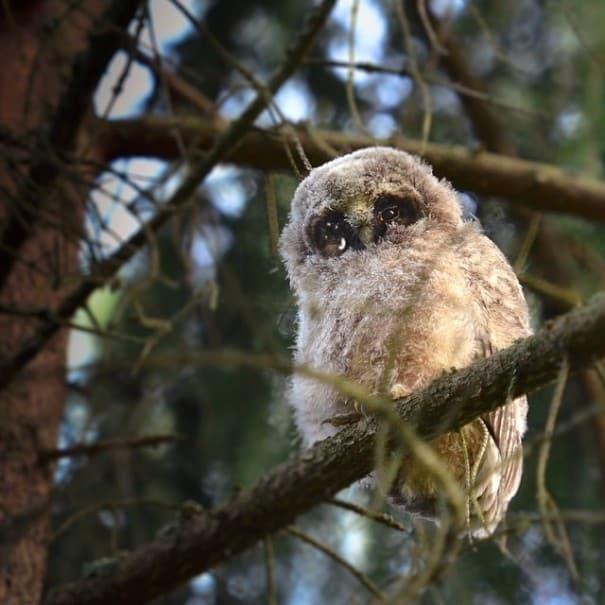 finnish-wildlife-feeding-squirrel-whisperer-konsta-punkka-51